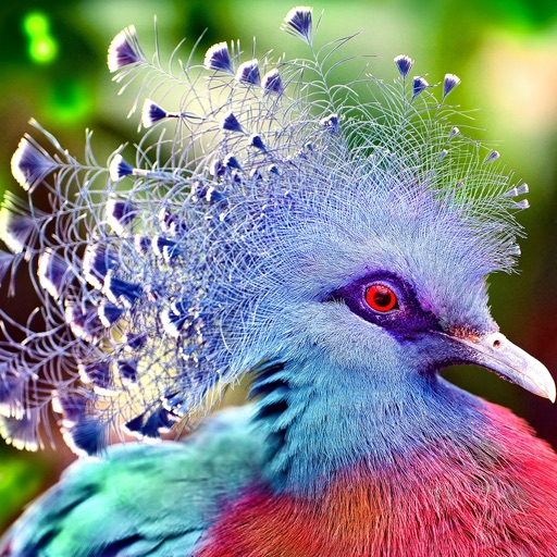 Birds Wallpapers Beautiful Birds Pictures In Hd By Prakrut Mehta