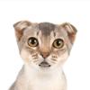 歌う猫  2 - トーキング・キャット