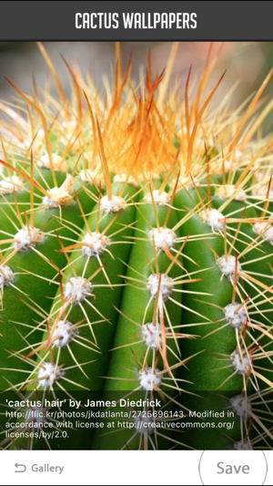 Cactus Wallpaper on the App Store