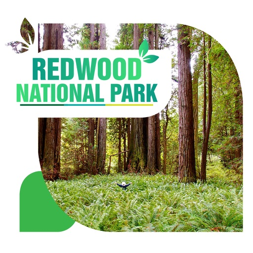 Redwood National Park Travel Guide
