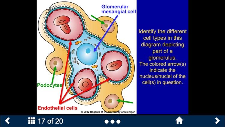 Histology Lite - SecondLook screenshot-3