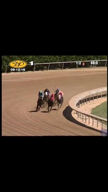 Horse Races Now screenshot-3
