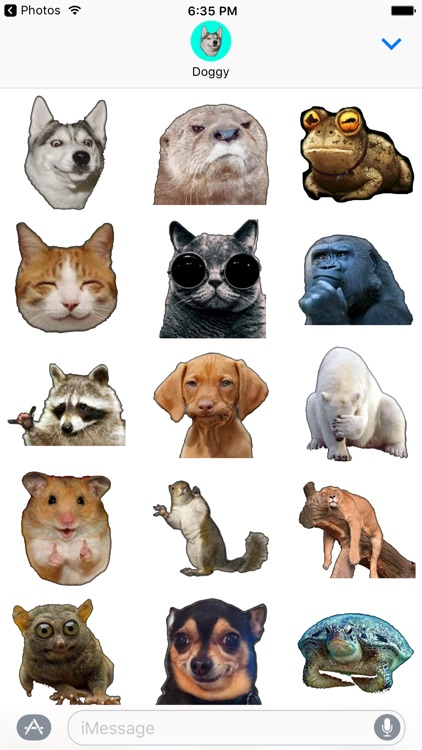 Cute Animals memes stickers pack for iMessage
