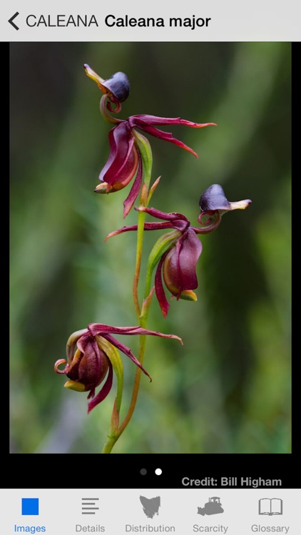 Orchids of Tasmania