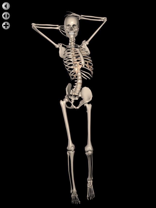 360 Anatomy for Artists HD: Female Figure on the App Store