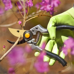 How to Prune Guide and Tutorials-Pruning Tips