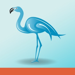 Blue Flamingo Wealth Management
