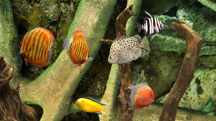 MyLake 3D Aquarium TV