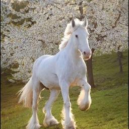 Horses HD