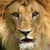 Sprekende leeuw