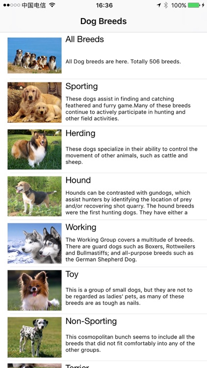 Dogs Bible