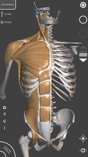 Anatomía 3D para el artista   v. 1.2 en App Store