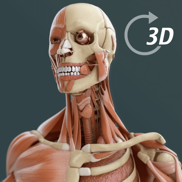 Visual Anatomy 3d Human On The Mac App Store