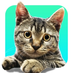 Meow Yourself: A Cat Face Cam and Pic Stickers (#MeowYourself)