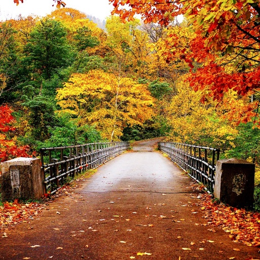 Autumn HD Wallpapers By Anjaneyulu Reddy