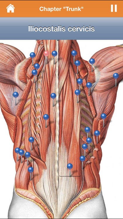 Sobotta Anatomy Atlas screenshot-1