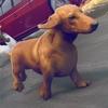 Dog Simulator 2016 . Free Dog Games For Children Reviews