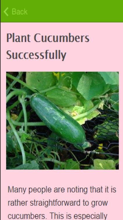 How To Grow Cucumbers