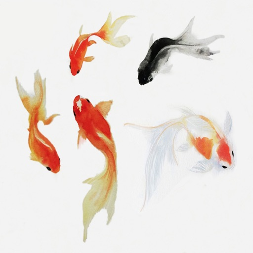 Fish Collection