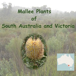 Mallee Plants of South Australia and Victoria