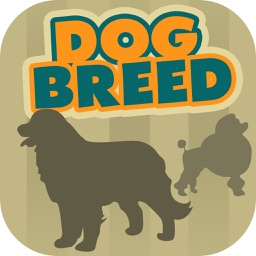 Dog Breeds Trivia Quiz – All Types of Your Favorite Dogs in the Same Place