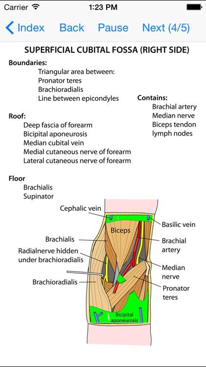 Anatomy Lectures Limbs screenshot-4
