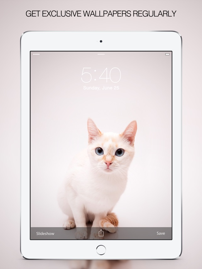 Cat Wallpapers Cat Pictures On The App Store