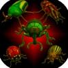 真正的昆虫:甲壳虫粉碎机