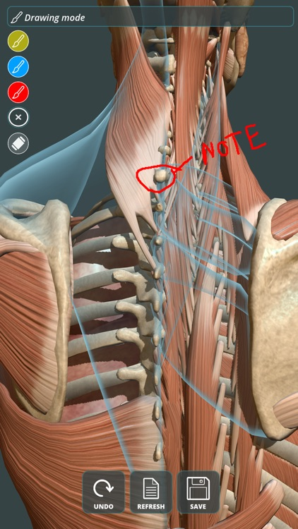Visual Anatomy 3D | Human screenshot-1