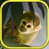 研究小动物:单机游戏大全免费