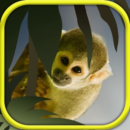 Small Animal Research:Animal care Game