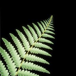New Zealand Nature Sounds