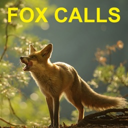 Predator Calls for Hunting Fox