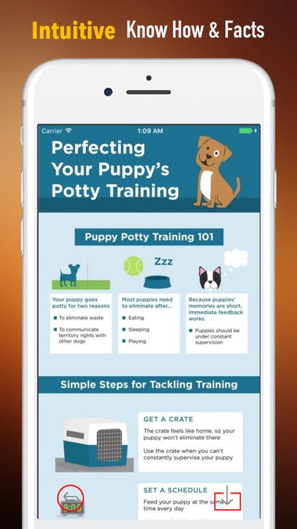 Puppy Training for Beginner Guide - Training Tips screenshot-0