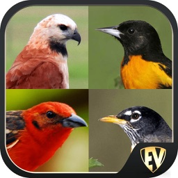 Non-Passerine Birds SMART Dictionary