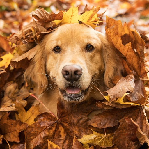 Dog Training Guide -Learn Basic Dog Training Tips