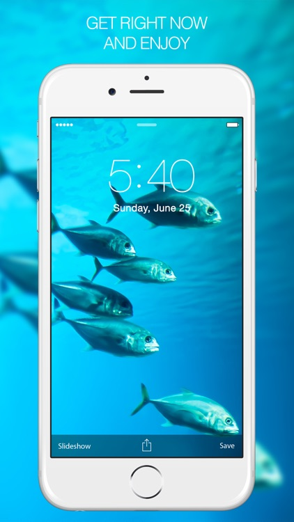 Fish Pictures – Fish Wallpapers & Backgrounds screenshot-4