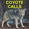 Coyote Calls for Predator Hunting Coyote