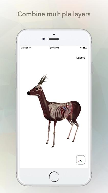 Deer Anatomy screenshot-3