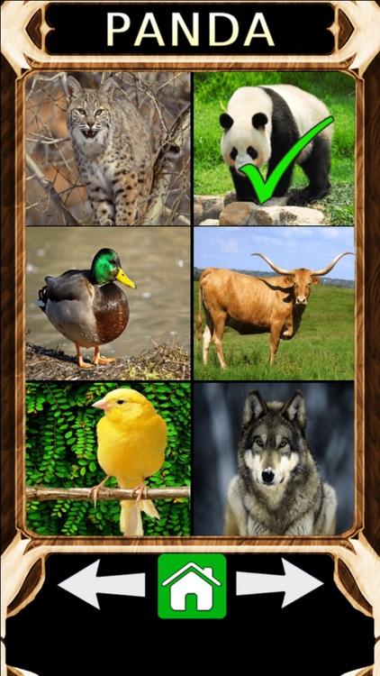 Animal Sounds Quiz 2.0
