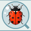 Adalia, Field Guide to Ladybugs of North America