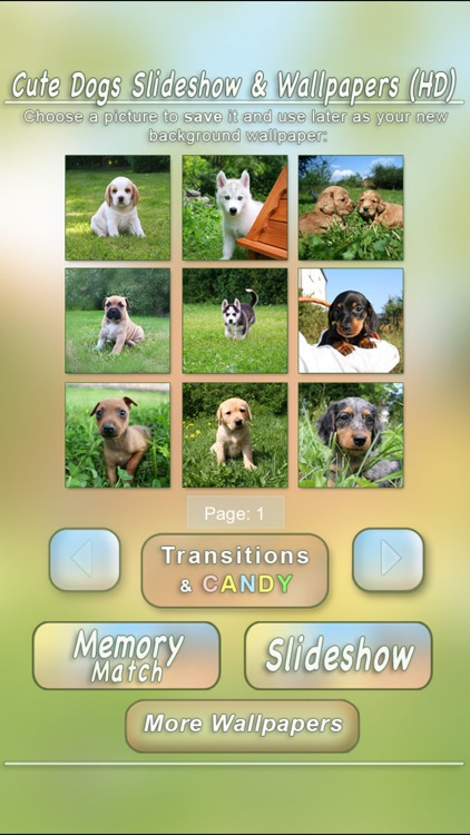 Cute Dogs Slideshow & Wallpapers (HD) screenshot-3