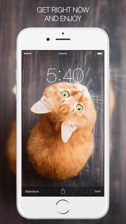 Cat Wallpapers & Cat Pictures screenshot-4