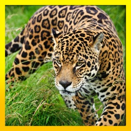 Ultimate Wild Life Jaguar: Simulation