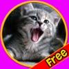chats amicaux pour tous les enfants - jeu gratuit