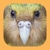 Birds of New Zealand - iPhoneアプリ