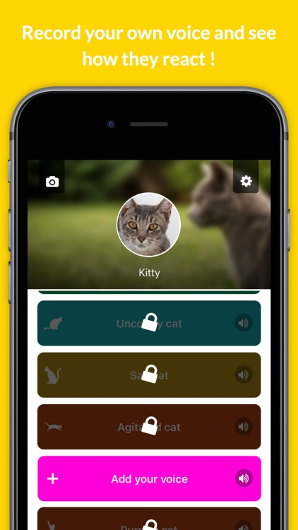 Human to cat translator - talk to your cat !