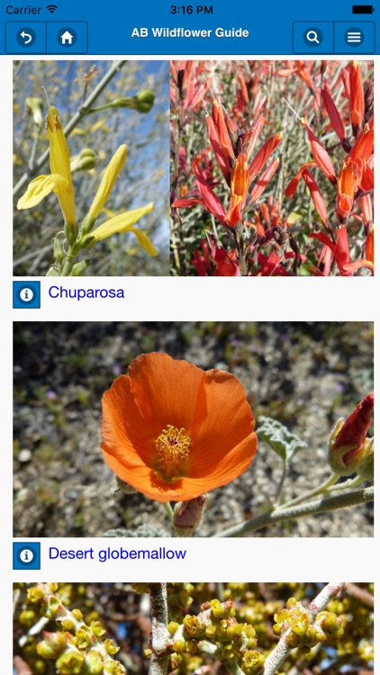 Anza-Borrego Wildflower Guide screenshot-2