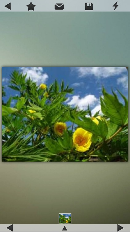 Medicinal Plants Collection screenshot-4
