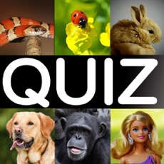 Activities of What is it? the funny picture quiz game!